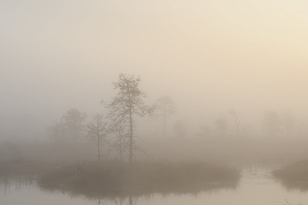 Bog in an autumn morning