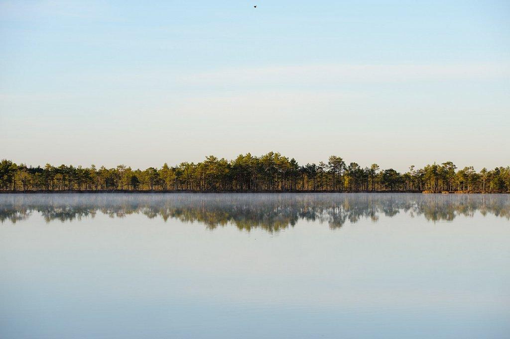 Mirror-still